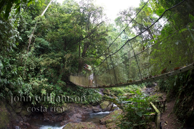 Nature Photography in Manuel Antonio Costa Rica - John Williamson at Rainmaker