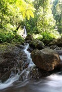Nature Photography in Manuel Antonio Costa Rica - jungle