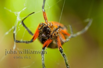 Nature Photography in Manuel Antonio Costa Rica - Spiders