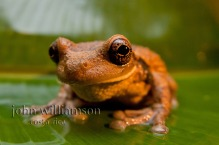 Nature Photography in Manuel Antonio Costa Rica - Frogs