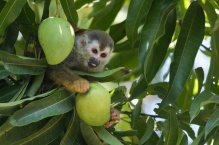 Wildlife Photography Costa Rica - John Williamson