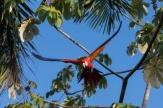 Nature Photography Costa Rica - John Williamson